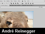 Neuer Arbeitsbereich in Fireworks CS4